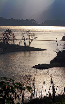 《岸、水、木》——杨威胜摄影